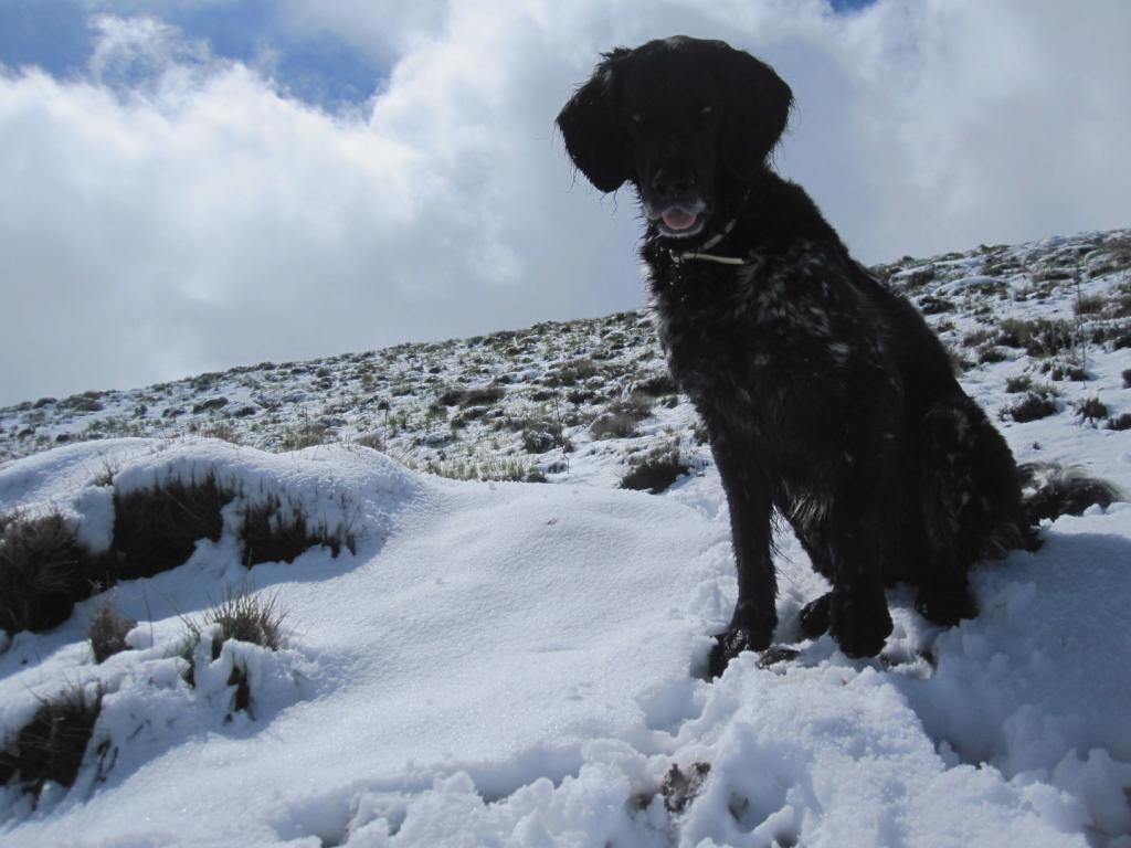 Jimmy in the snow