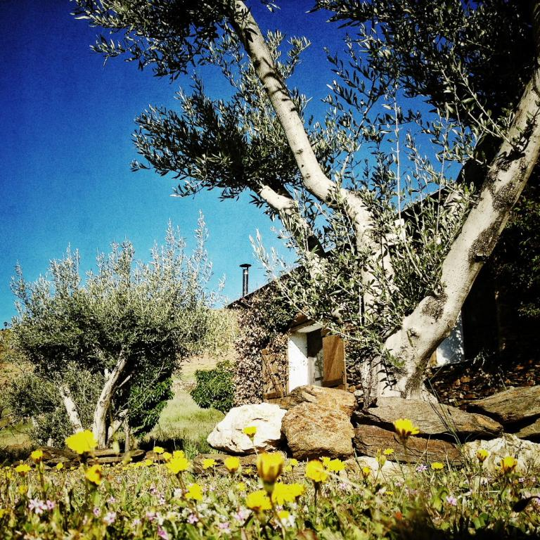 Olive trees on breakfast terrace. Photo: Cheryl Jenks.