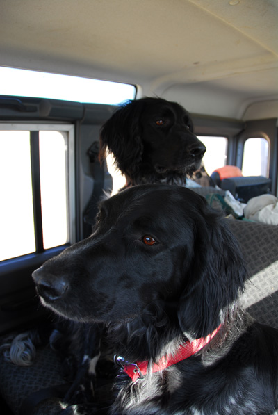 Jimmy and Lucy in the Land Rover