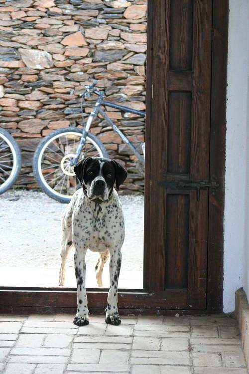 Visiting dog