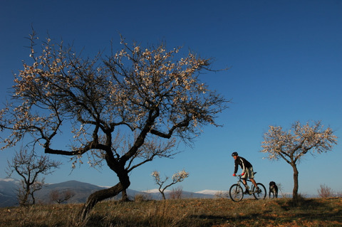 Pure Mountains Mountain Bike Holidays